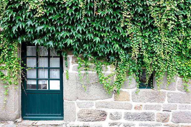 Façade maison avec porte bleue et lierre sur un mur en pierre